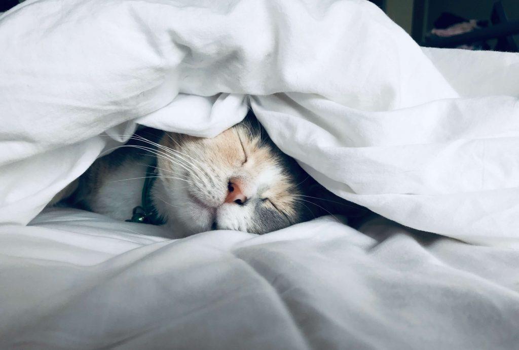 睡眠の改善【すぐ】